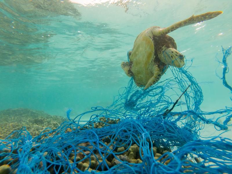 Plastica in mare: conseguenze e soluzioni